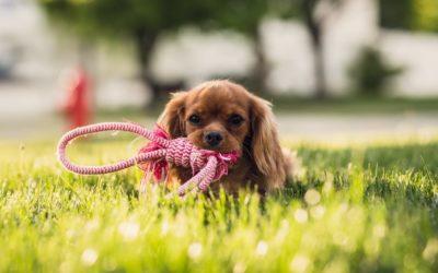 Jak zaprzyjaźnić się z psem?