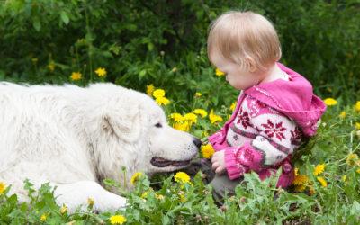 Czy posiadanie zwierzaka wspiera rozwój dziecka?