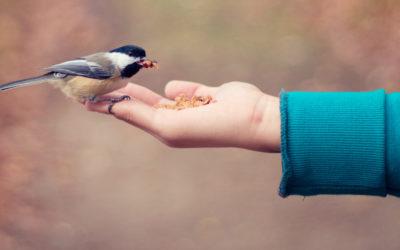 Jak opiekować się ptakami?